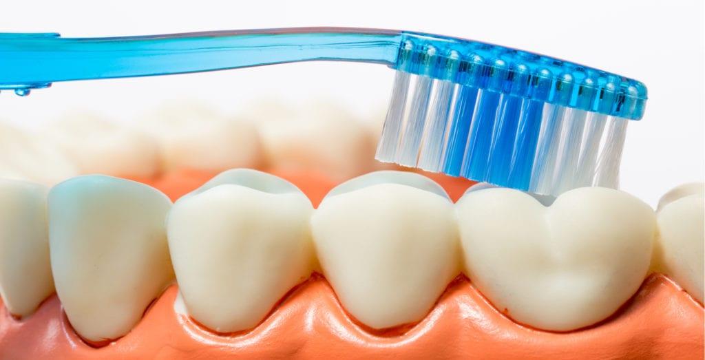 teeth model and toothbrush